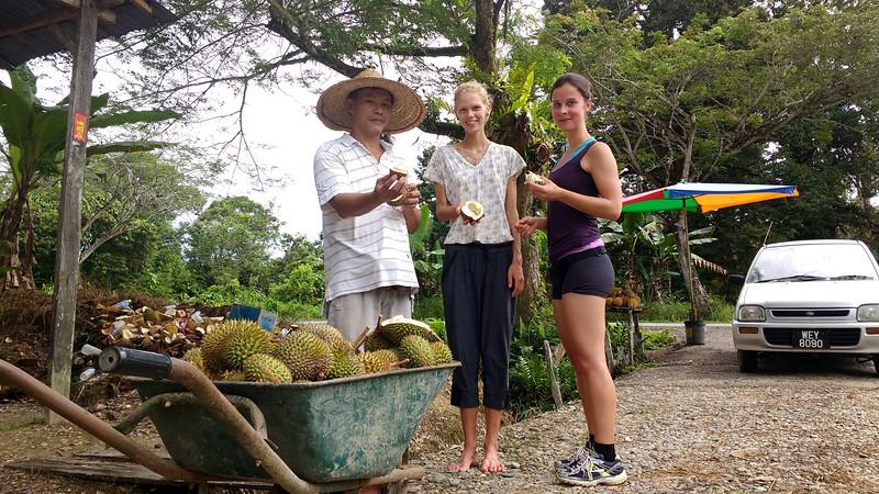 sibu durian orchard