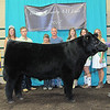 Rod Rose The Lebanon Reporter<br /> GRAND CHAMPION STEER: Nola Dickerson stands with her grand champion steer at the Boone County 4-H Beefo Show Monday; it was the third straight year she has won the title.