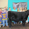 Rod Rose The Lebanon Reporter<br /> GRAND CHAMPION HEIFER: Alesix Wilhoite is joined by friends, family, the Boone County 4-H Fair Queen court, and show judge Austin Wheeler after he declared her animal the grand champion heifer at Monday's Boone County 4-H Fair Beef Show.