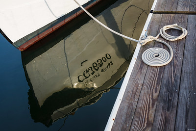 CG36500 Reflection