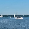 Skipjack field with cluster of boats