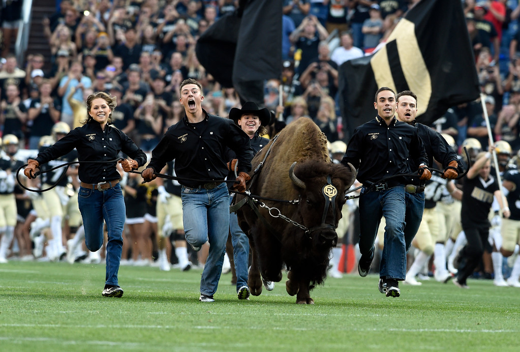 . University of Colorado handlers run with Ralphie the CU mascot during the Rocky Mountain Showdown against Colorado State University on Friday at Sports Authority Field in Denver. More photos: Buffzone.com Jeremy Papasso/ Staff Photographer/ Sept. 1, 2017