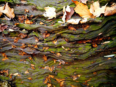 Bark on the Knobstone
