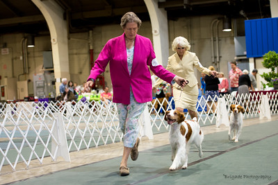 BRITANY VETERAN SWEEPSTAKES 10 years and older Dogs. 1/B      5GCH GAITWAY-SANDBAR SILVER SPOON , SR32428004 2/23/2006. Breeder: Leah Shirokoff. By CH Sandbar's Casanova -- CH Gaitway To Infiniti. Leah Shirokoff . Dog.