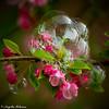 AngeliaPeterson_Happy8_wk15