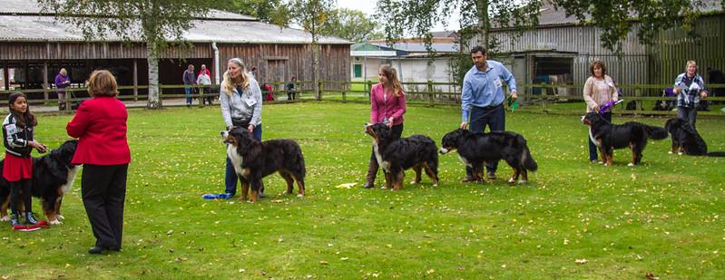 Special Junior Dog line up