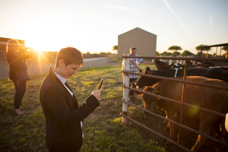 Katherine Post takes a photo of the cows at the University Farm on Thursday, April 27, 2017, in Chico, Calif.  (Jessica Bartlett/ Photographer)