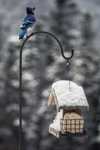Birds through Mom's back door.
