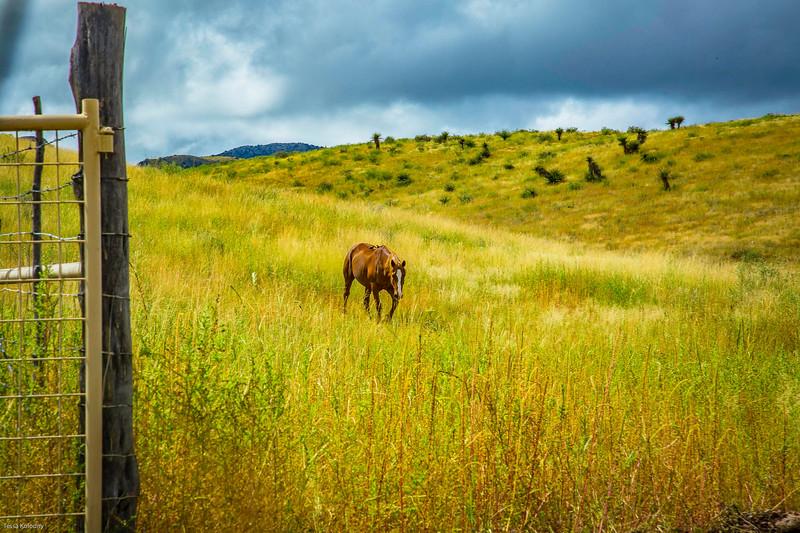 Cibolo Creek Ranch-6740