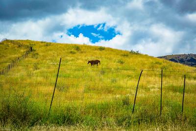 Cibolo Creek Ranch-6736