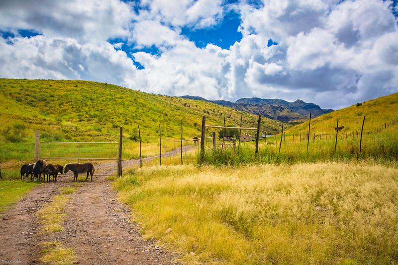 Cibolo Creek Ranch-6718