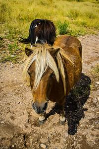 Cibolo Creek Ranch-6734