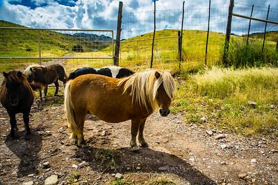 Cibolo Creek Ranch-6726