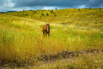 Cibolo Creek Ranch-6743