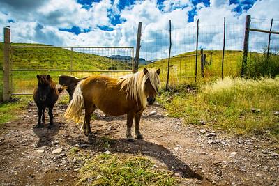 Cibolo Creek Ranch-6729