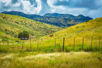 Cibolo Creek Ranch-6717