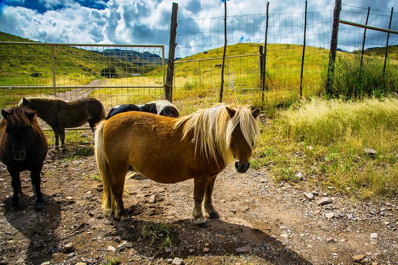 Cibolo Creek Ranch-6727