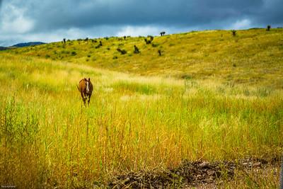 Cibolo Creek Ranch-6741