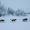 Copper Basin 300 Dogsled Race
