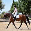 SVE 17 Zorro 1155