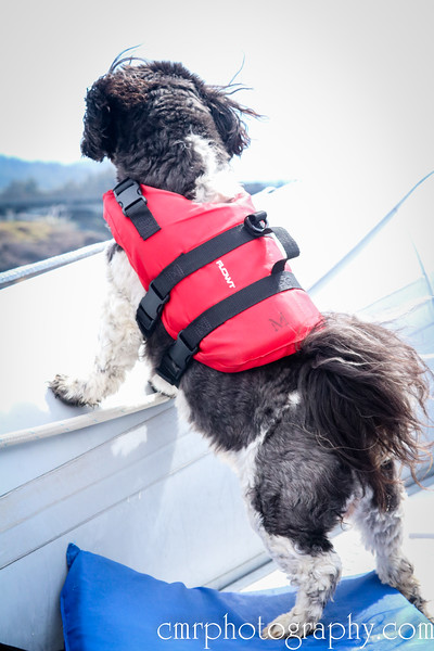 Missy, the whale watching dog