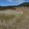 Grassy mowed track