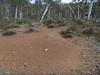Mega ant nest