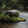 tree trunk in the river