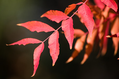 Fall in NE Texas