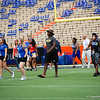 University of Florida Gators Football Gator Walk Tennessee Volunteers 2017