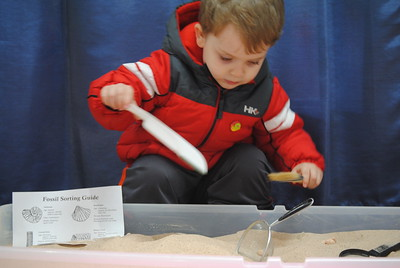 Leah McDonald - Oneida Daily Dispatch Henrik Ritter, 3, digs for fossils at the Winter Hibernation Festival at the Great Swamp Conservancy in Canastota, N.Y., on Saturday, Feb. 11, 2017.