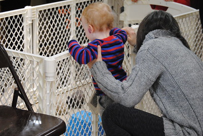 Leah McDonald - Oneida Daily Dispatch Samuel Deaton, 18 months, checks out the animals from Out of the Cage Wildlife Rescue at the Winter Hibernation Festival at the Great Swamp Conservancy in Canastota, N.Y., on Saturday, Feb. 11, 2017.