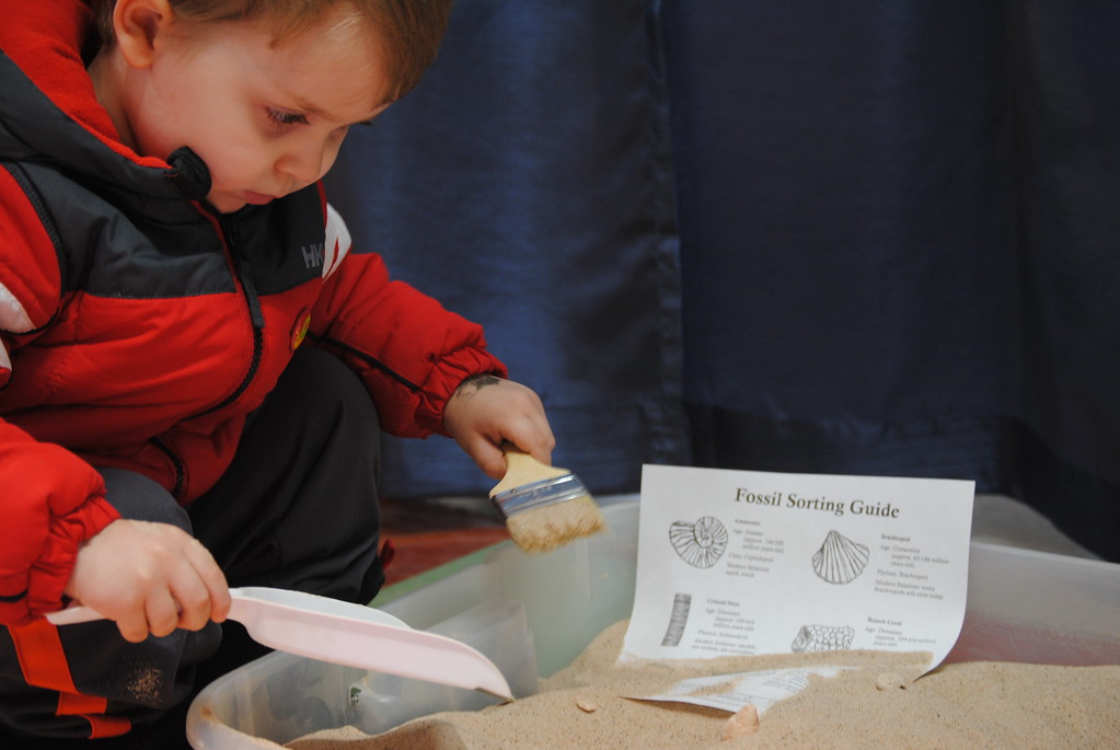. Leah McDonald - Oneida Daily Dispatch Henrik Ritter, 3, digs for fossils at the Winter Hibernation Festival at the Great Swamp Conservancy in Canastota, N.Y., on Saturday, Feb. 11, 2017.