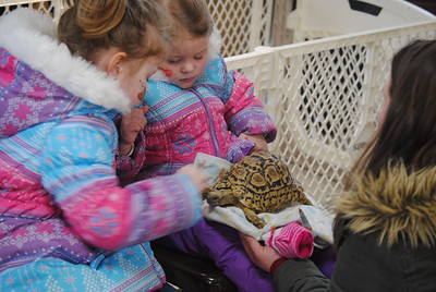 Leah McDonald - Oneida Daily Dispatch Kenzlie Funari, 5, left, and Lillian Glynn, 2, pet Big Mac the tortoise at the Winter Hibernation Festival at the Great Swamp Conservancy in Canastota, N.Y., on Saturday, Feb. 11, 2017.