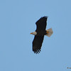 DSC_0289 Bald Eagle Feb 3 2017
