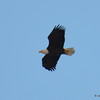 DSC_0290 Bald Eagle Feb 3 2017