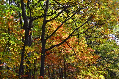 fall_tapestry1