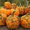 Pickled Pumpkins rsz