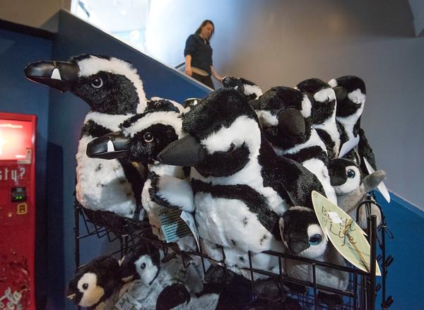 170223 Penguins 5