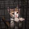 171025 Pet of the Week