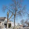 170321 City Trees 2