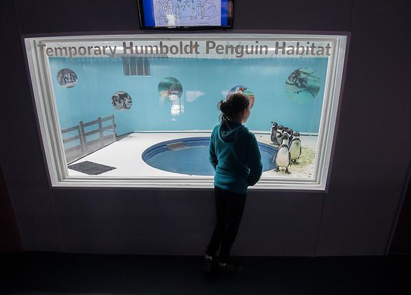 170223 Penguins 2