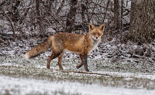 170215 Fox