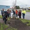 171113 Tree Planting