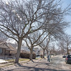 170321 City Trees 1