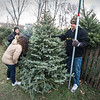 171207 Christmas Tree 1