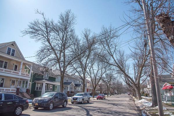 170321 City Trees 3