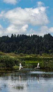 Humbolt Bay Wildlife Refuge, California