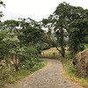 Road into Los Terrales Lodge and Nature Reserve - good birding.