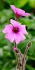3/18/17   Longwood Gardens Mediterranean Garden Flower